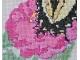 pink zinnia closeup